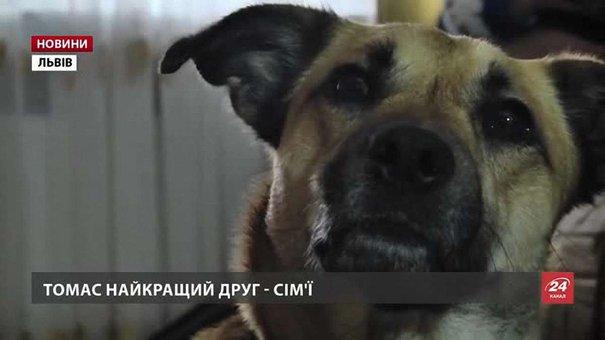 На Львівщині намагаються врятувати собаку, який «навчив» дівчинку говорити