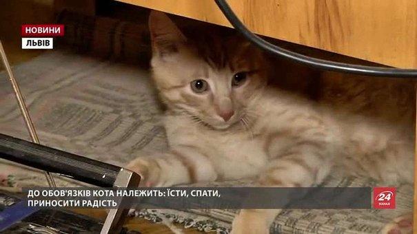 Львівський музейний кіт Мурлика отримав свою першу посадову інструкцію