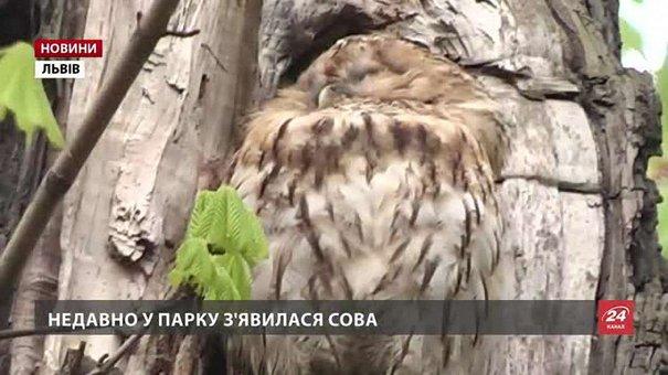 У львівському парку Франка поселилася сова
