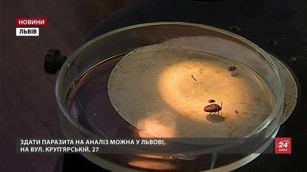 На Львівщині цьогоріч восьмеро людей заразилися від кліщів збудником хвороби Лайма