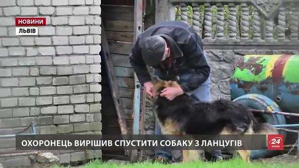 Львівські освітяни розпочали службове розслідування після нападу пса на дитину у садочку