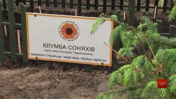 У львівському парку «Горіховий гай» висадили соняшники Богдана Гаврилишина
