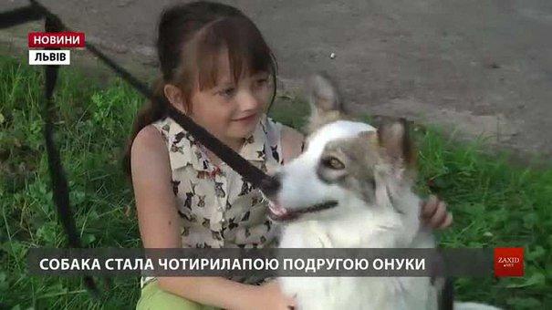 У Львові за місяць понад півсотні собак знайшли нові домівки