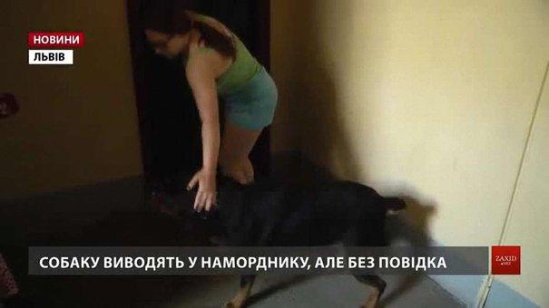 Львів'янка не хоче віддавати ротвейлера, якого мають конфіскувати за рішенням суду