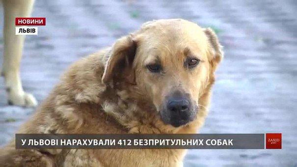 Волонтери нарахували у Львові понад 400 безпритульних собак