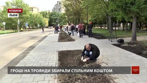 У Львові переселенці з місцевими мешканцями висадили алею троянд