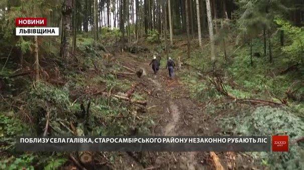У Старосамбірському районі поблизу кордону екологи виявили незаконну вирубку лісу