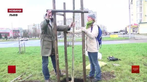 На Сихові висадили два десятки дерев вздовж трамвайної колії