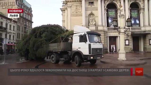 До Львова привезли головну ялинку міста