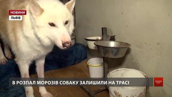 Львівські волонтери збирають гроші на лікування cобаки з епілепсією