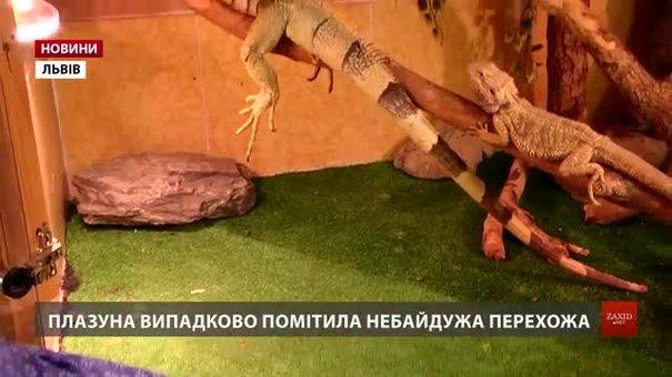 У Львові знайшлася власниця врятованої ігуани