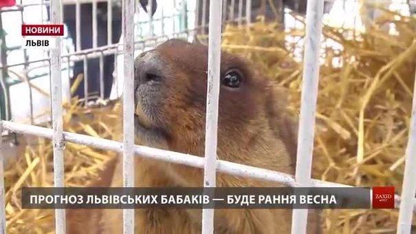 Львівські бабаки зробили свій прогноз на ранню весну