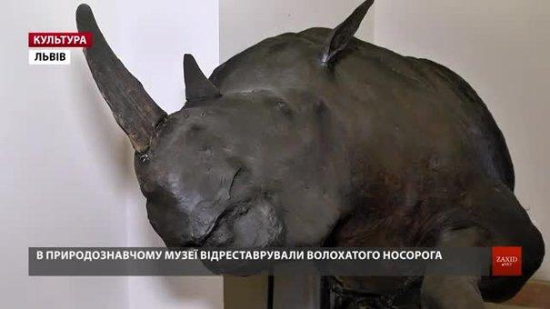 У природознавчому музеї Львова покажуть волохатого носорога, якому 14,5 тис. років