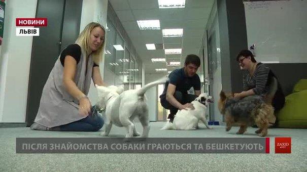 Працівники 30 компаній Львова взяли зі собою на роботу собак