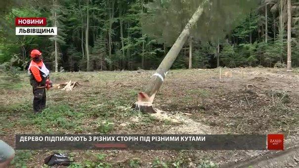 На Львівщині визначили найкращого вальника лісу
