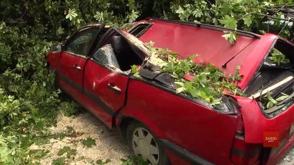 На вулиці Пекарській на припарковані автівки впало дерево
