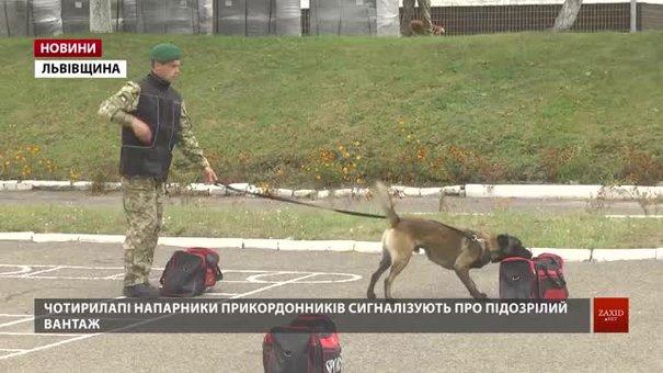 На Львівщині прикордонники продемонстрували, як службові собаки шукають наркотики і зброю