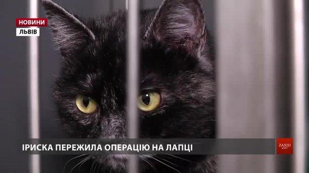 Львів'ян закликають прихистити травмованих тварин
