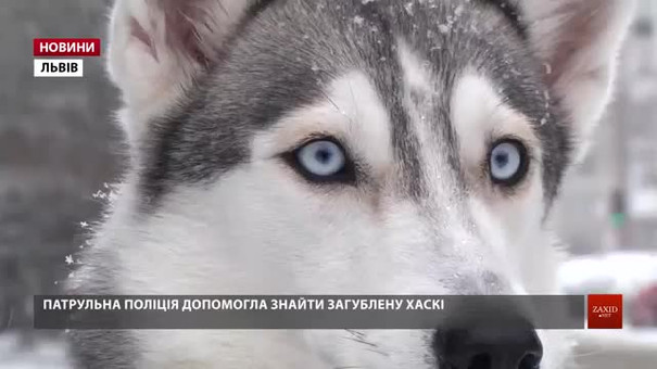 Львівські поліцейські допомогли господарям знайти загублену хаскі Еллі