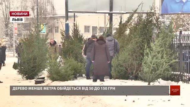 У Львові почали продавати новорічні ялинки
