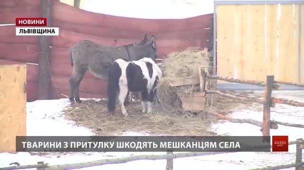 Мешканці села Красів на Львівщині вимагають перевірити притулок для свійських тварин