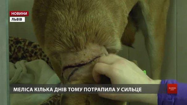 У Львові в браконьєрські пастки потрапляють собаки