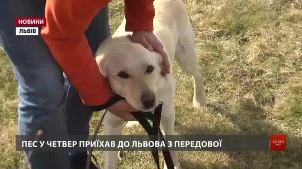 У Львові для легендарного собаки шукають нових господарів