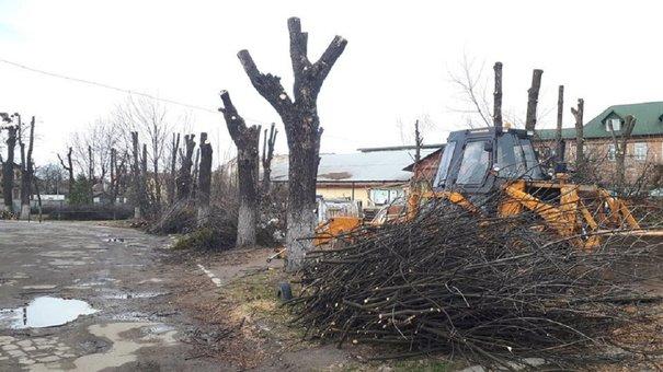Садовий заборонив будь-яку обрізку дерев у Львові