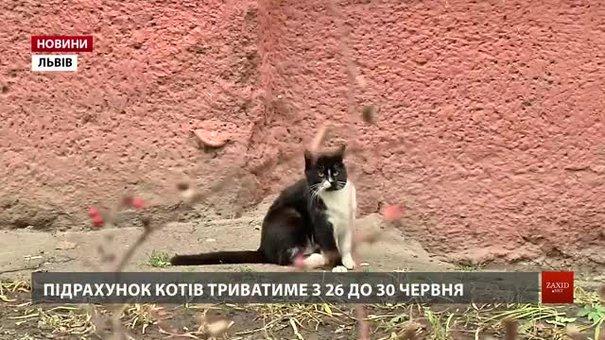 У Львові вперше у світі порахують безпритульних котів