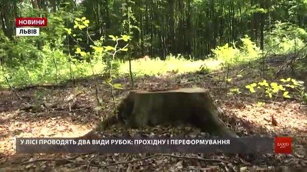 У буковому лісі на Львівщині активно рубають здорові дерева