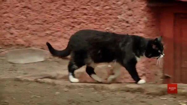 У Львові нарахували шість тисяч бездомних котів