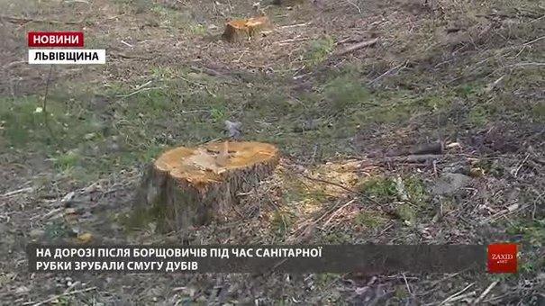 У лісах Львівщини перевірять законність вирубок