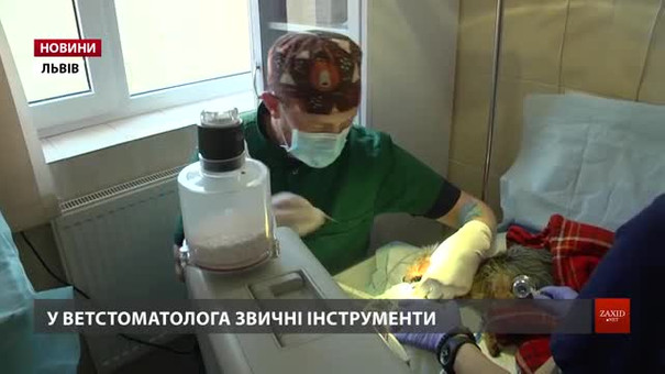 Стоматкабінет в ЛКП «Лев» прийняв вже понад сотню пацієнтів