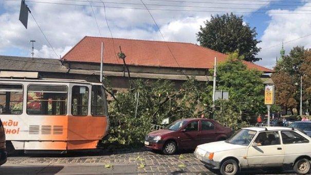 У центрі Львова на тротуар і дорогу впав сторічний ясен