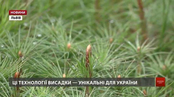 На Львівщині використовують технологію вирощування лісу, яка не має аналогів в Україні