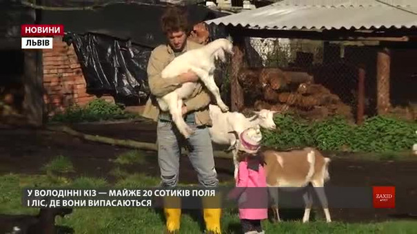 Подружжя створило біля Новояворівська козину ферму і розвиває екотуризм
