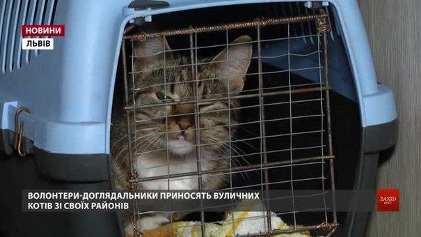 На ЛКП «Лев» впродовж п'яти днів безкоштовно стерилізуватимуть котів