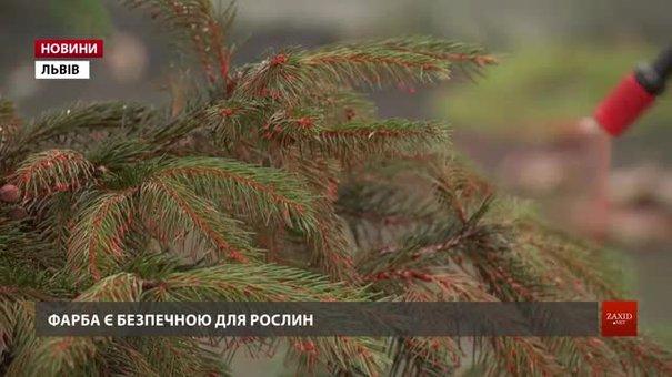 Хвойні дерева у львівському Парку культури стали червоними