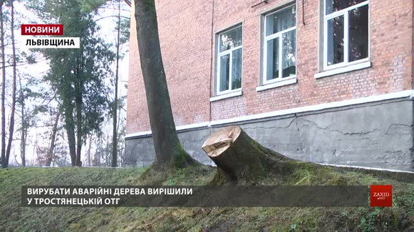 У Тростянецькій ОТГ вирізали понад півтисячі дерев