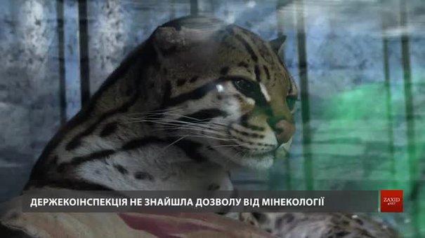Держекоінспекція виявила порушення в утриманні диких кішок на приватному подвір'ї у Бориславі