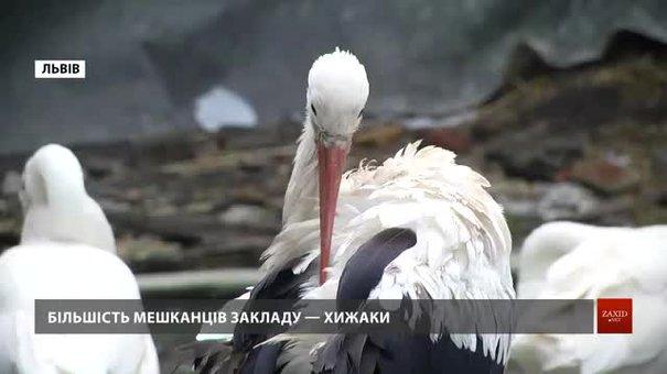 Львівська Домівка врятованих тварин потребує коштів на їжу для підопічних