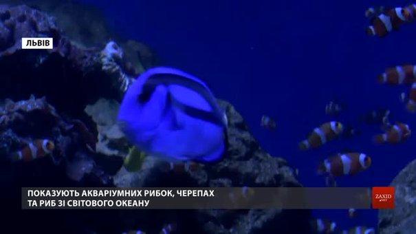 У центрі Львова відкрили перший у місті приватний океанаріум