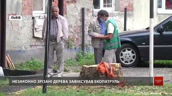 Львівський екопатруль виписав рекордний штраф за знищення дерев