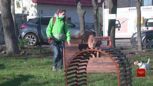У Львові з'явився новий тренувально-вигульний майданчик для собак