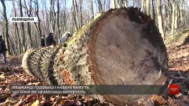 У лісі поблизу Львова активно вирубують здорові дерева