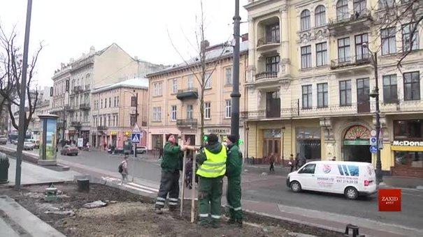 На площі перед Львівською Оперою висаджують платани