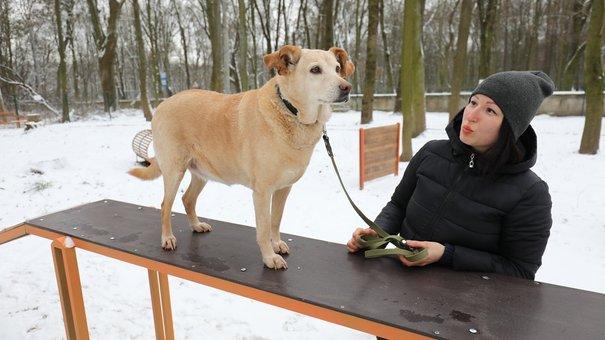 Біля львівського Парку культури відкрили дог-парк