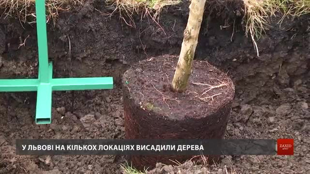 Львів долучився до міжнародної акції з висадки дерев