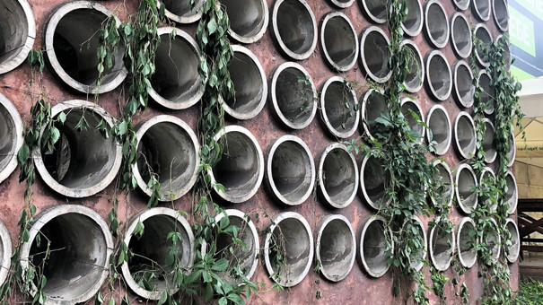 Невідомі знищили озеленення на стіні з дірами у Львові
