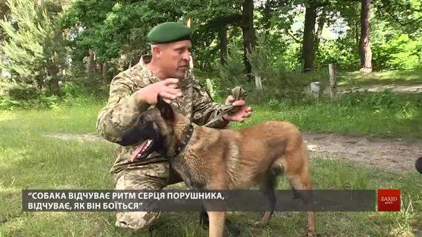 На Львівщині майбутні собаки-прикордонники склали іспити